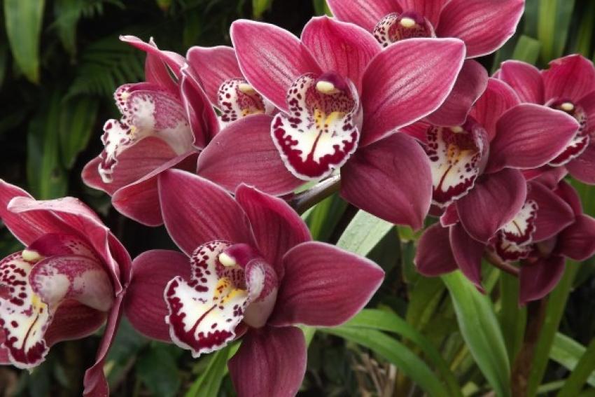Uzgojite zdravu orhideju