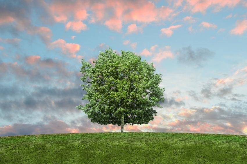 Lijepa riječ kao lijepo drvo
